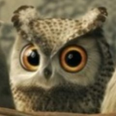 Photo of Master Owl ????;